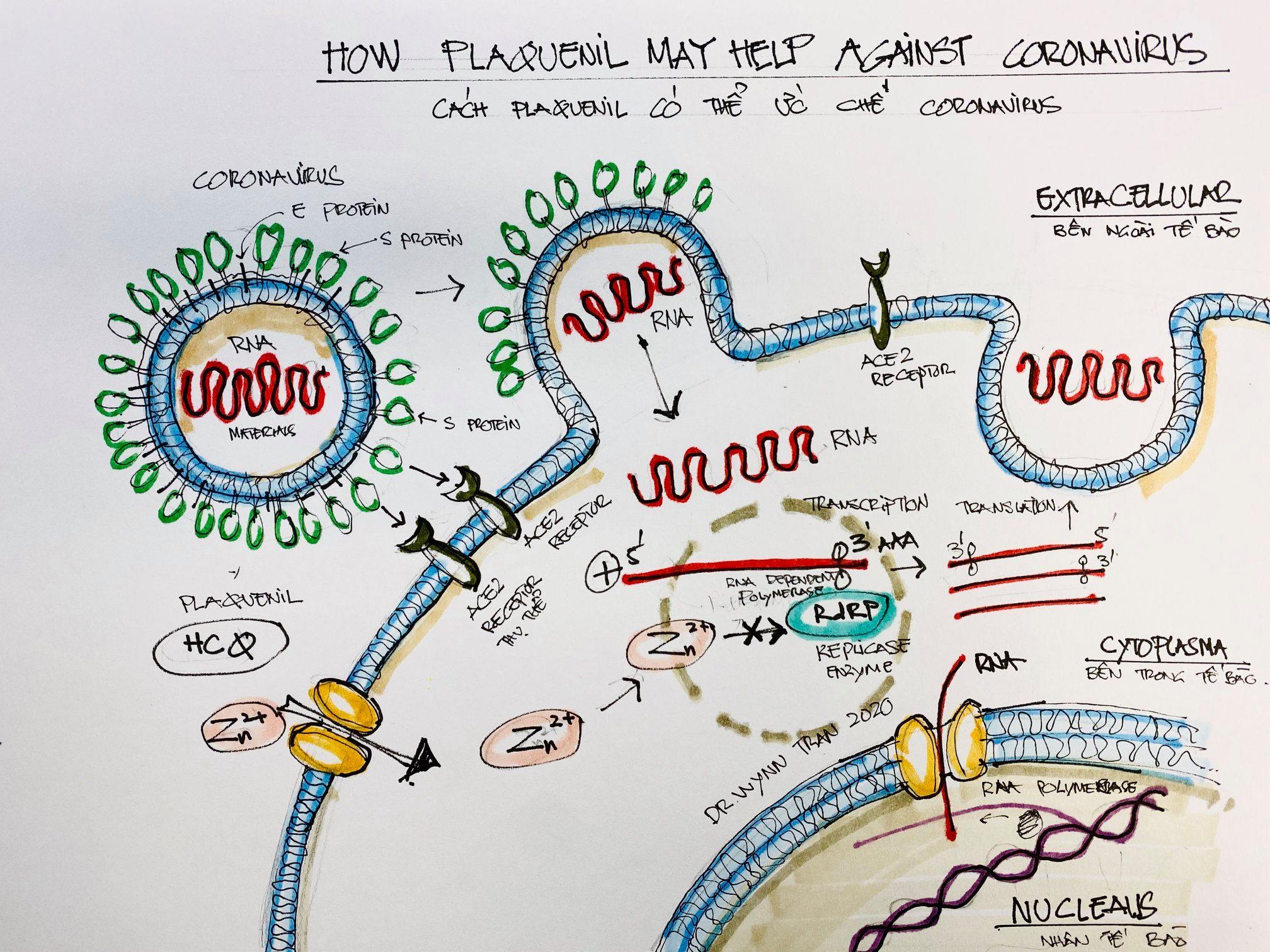 Cơ chế lây nhiễm của COVID-19