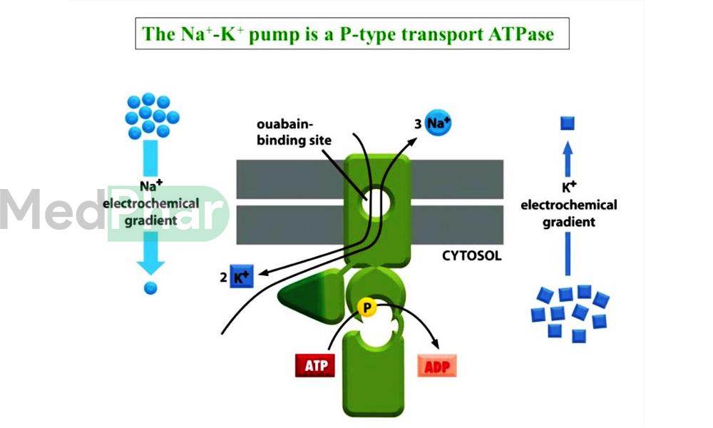 cơ chế tác dụng của thuốc PPI